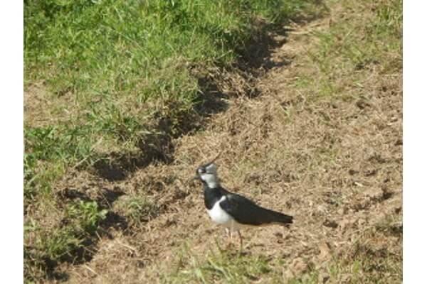 Любопытная птица