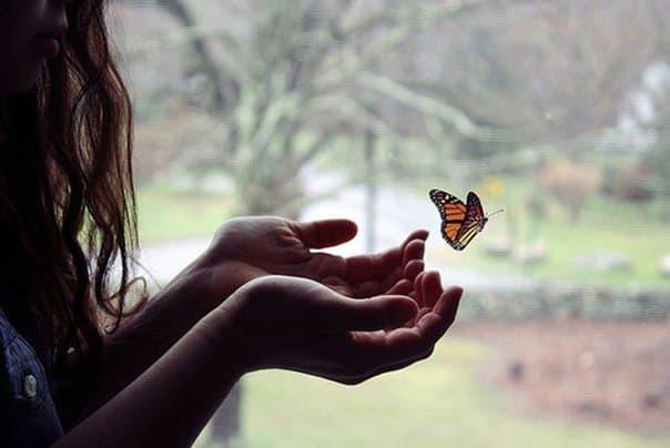 бабочка в ладонях