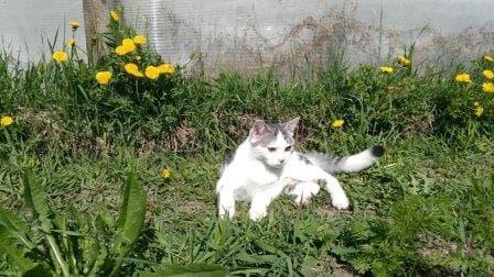 Кот Каспер