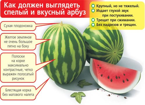 Чем полезен арбуз для нашего здоровья, как выбрать спелый арбуз