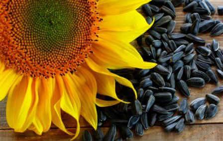 Семечки подсолнуха— польза и вред для женщин, для мужчин