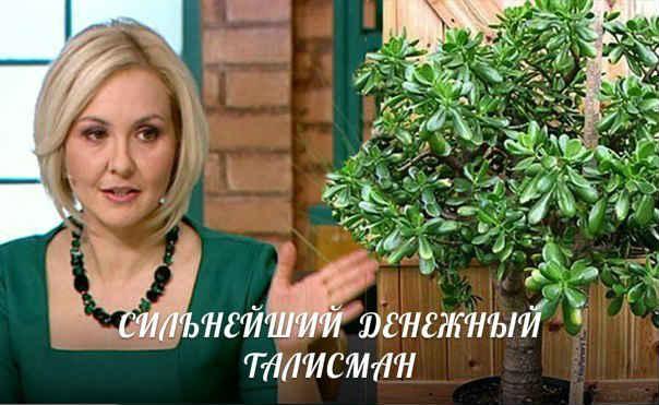 denezhnoe-derevo-sueveriya-i-primety