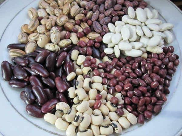 semena-struchkovoj-fasoli