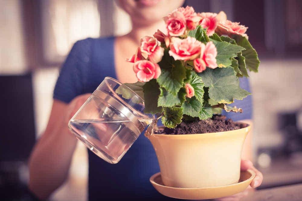Как использовать перекись водорода для растений