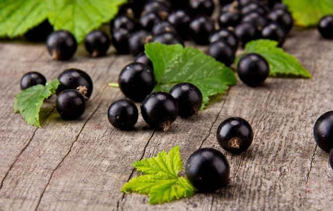 Черная смородина— посадка и уход, способы размножения