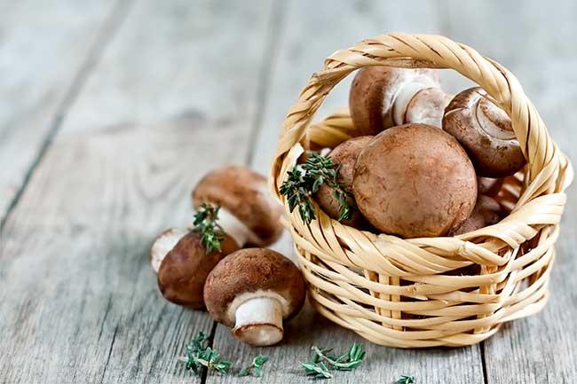 Съедобные грибы – фото и название на вооружение грибнику