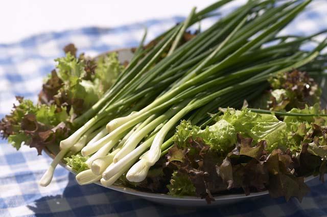 Зеленый лук с листьями салата