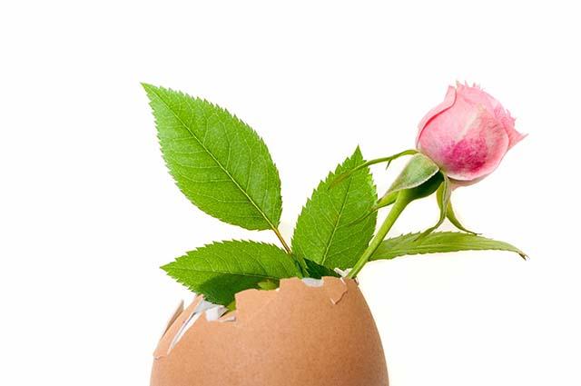 Цветок в яичной скорлупе