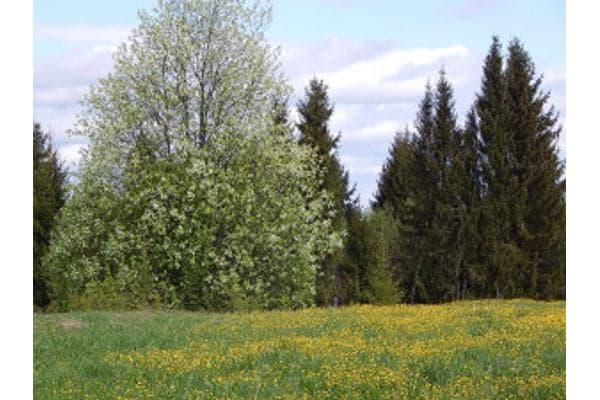 Весенняя поляна