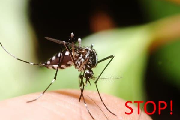 Стоп комар