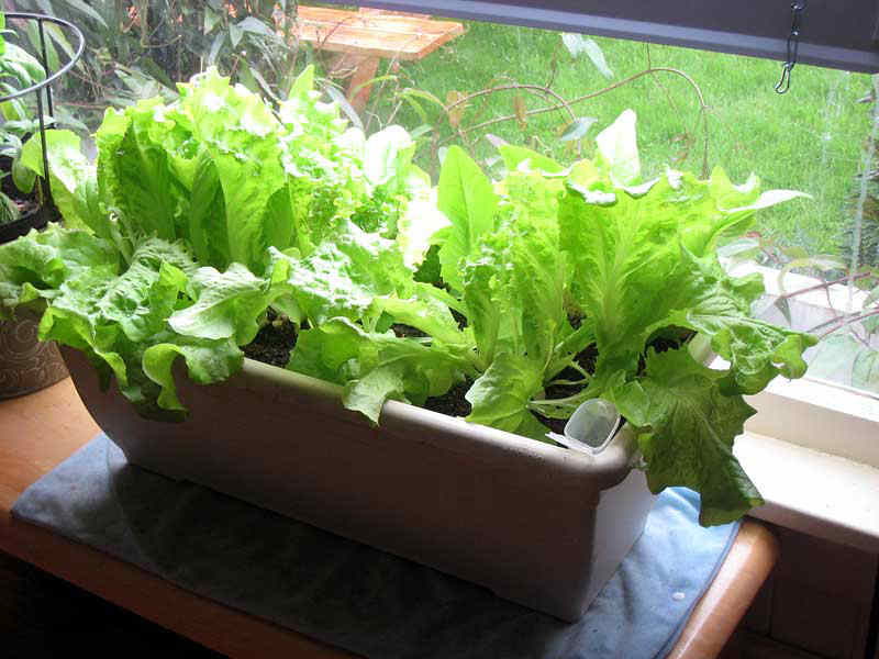 Выращивание еды в домашних условиях 48