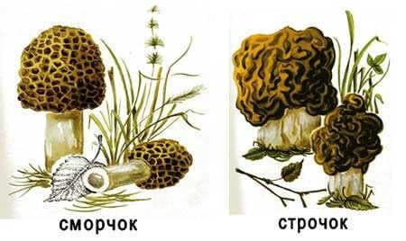Картинка грибов