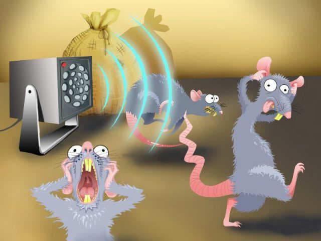Избавляемся от крыс
