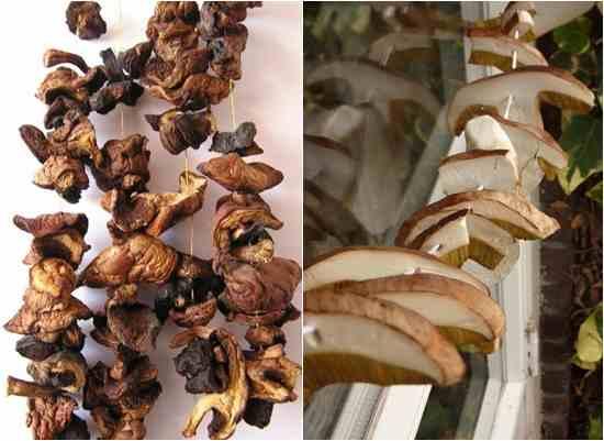 Сушилка для грибов