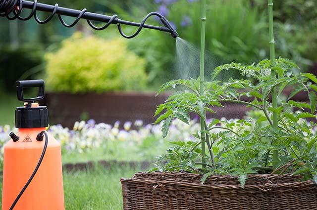 Обработка растений от тли
